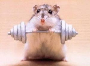 Weight Lifting Hamster